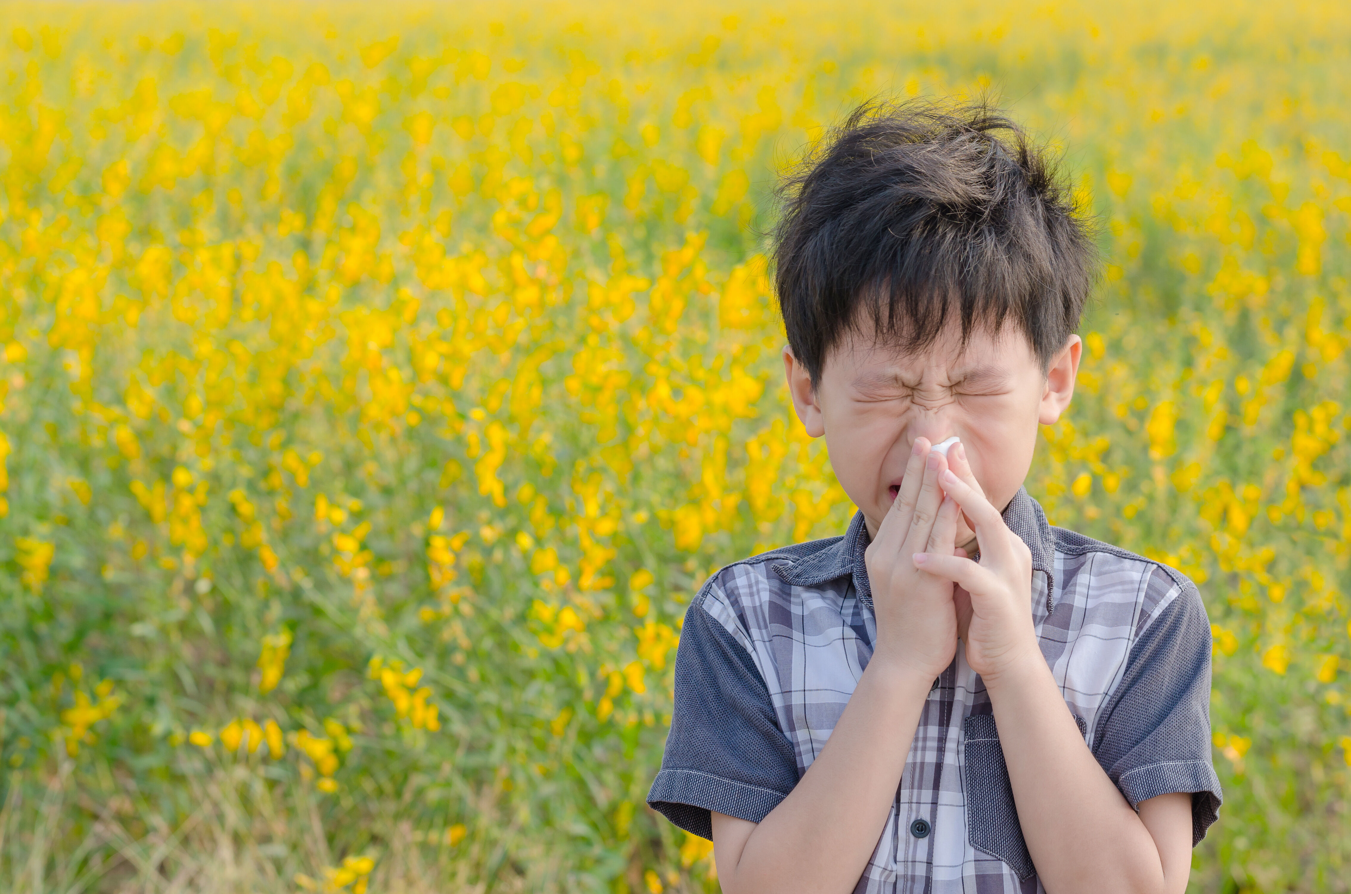 Allergic child sneezes in a field with flower