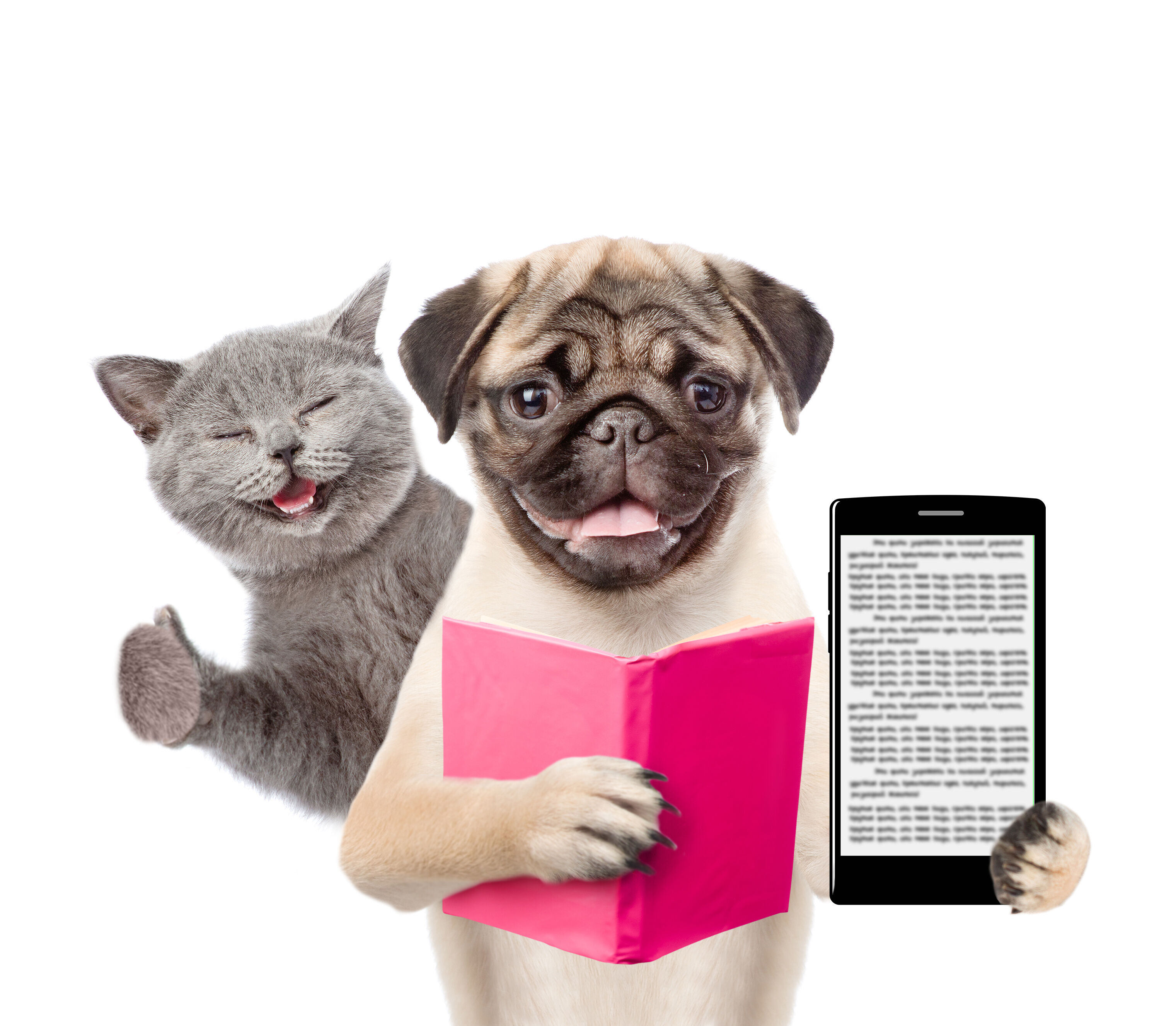 Cat and dog with a book