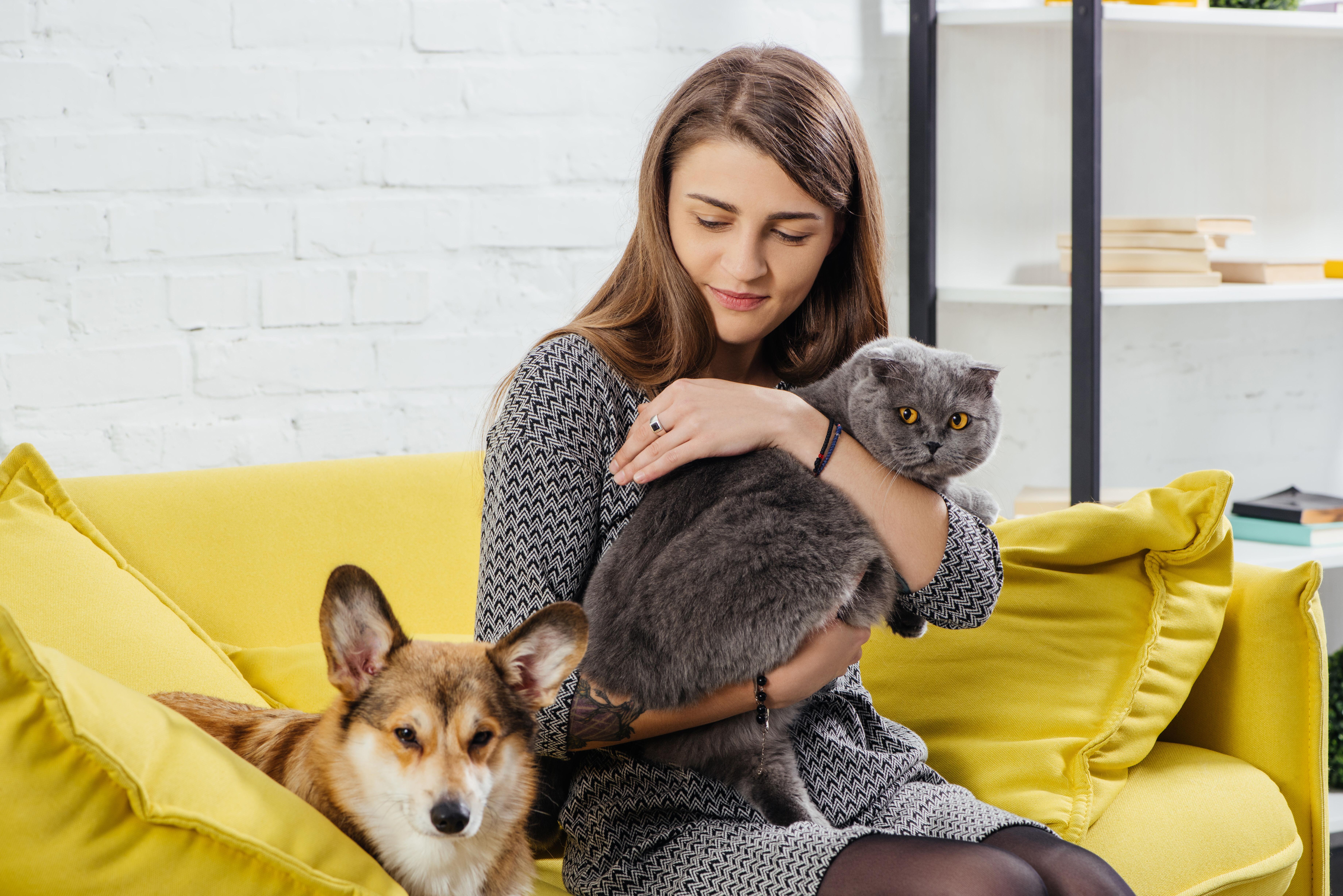 Woman holding cat near dog