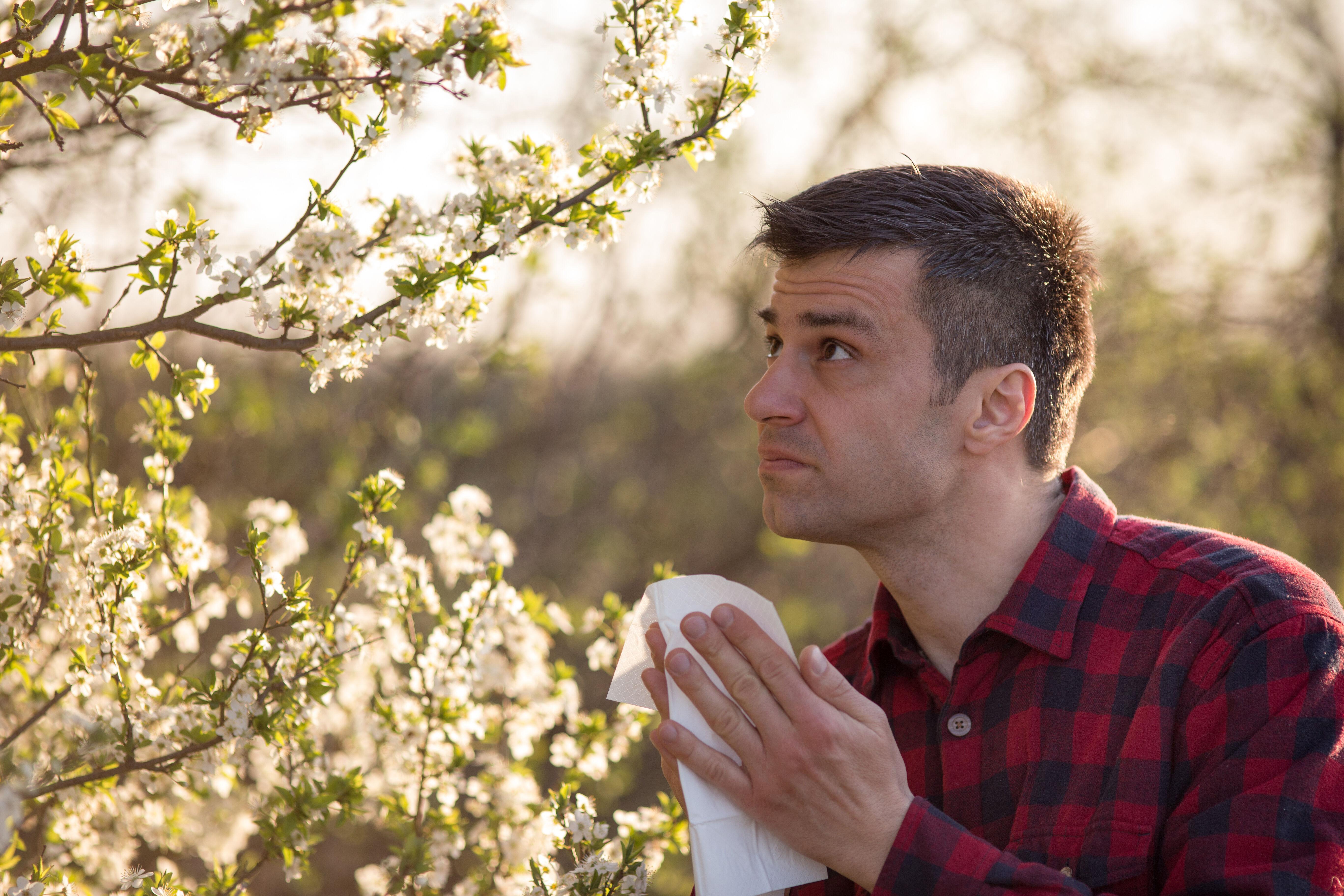 Allergic to flowering trees
